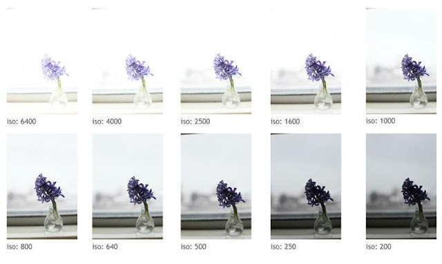 Pillars of Photography – Understanding ISO for Beginners
